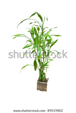 a bamboo is isolated on white