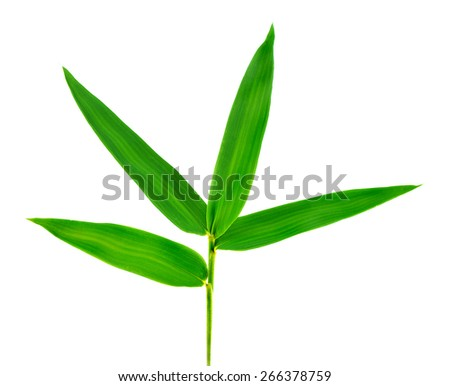 A Bamboo leaf isolate on white background.  - stock photo