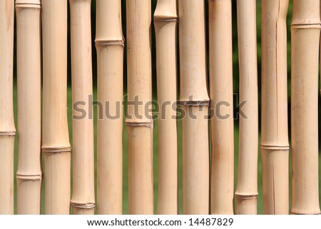 A Bamboo Wall - stock photo