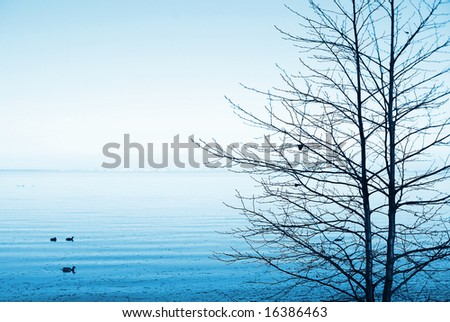 A bare tree on the coast