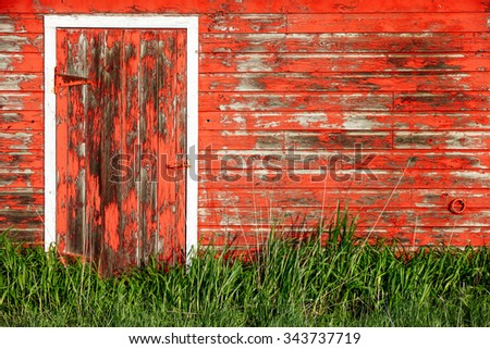 A barn wall  with red peeling paint and trimmed with tall green grass on a rural farm.