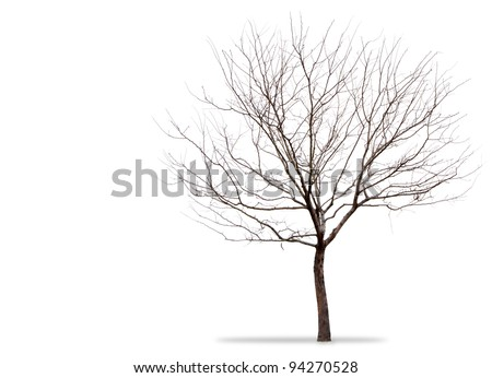 a barren tree on a white background - stock photo