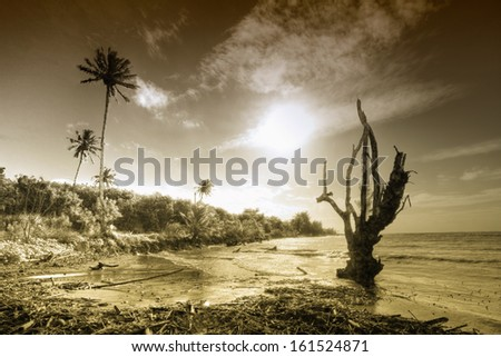 A barren tree trunk with palm trees in the distance. - stock photo