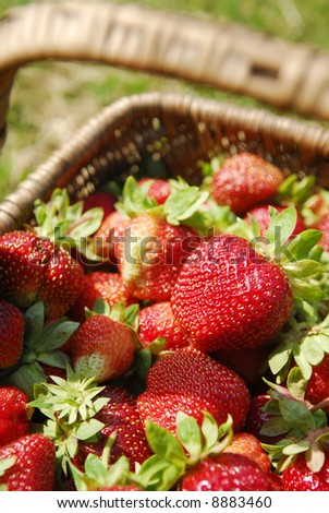 A basket full of strawberries