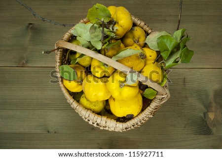 a basket of quinces on wooden, directly above - stock photo