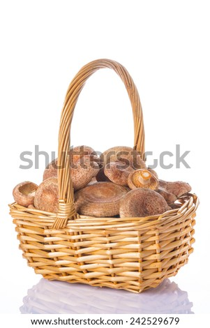 A basket with fresh saffron milk caps isolated on a white background - stock photo