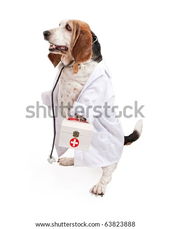 A Basset Hound dog dressed as a veterinarian wearing a white coat and a stethoscope while holding a medical box - stock photo