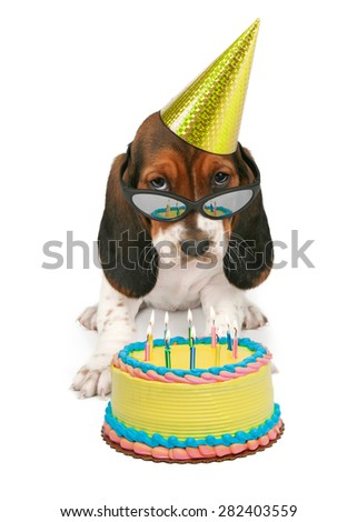 A Basset Hound puppy wearing sunglasses reflecting a birthday cake with candles - stock photo