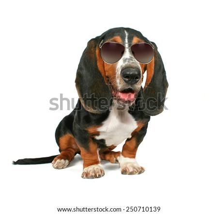 a basset hound sitting down on a white background with sunglasses on