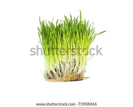 A batch of green grass isolated in the white background - stock photo