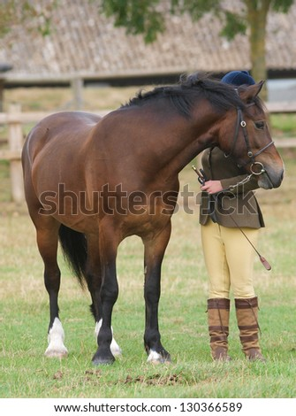 A bay horse stands in the show ring with its handler beside. - stock photo