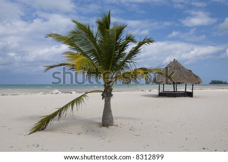 A beach hut and a palm tree on a deserted white sand beach - stock photo