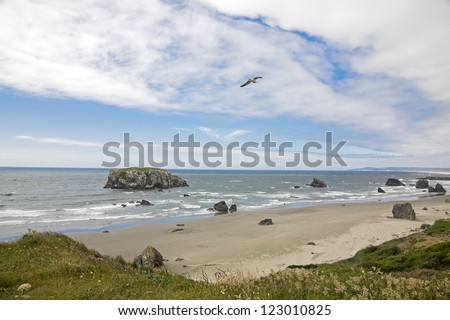 A beach view with sea gull flying from a hill with grass - stock photo