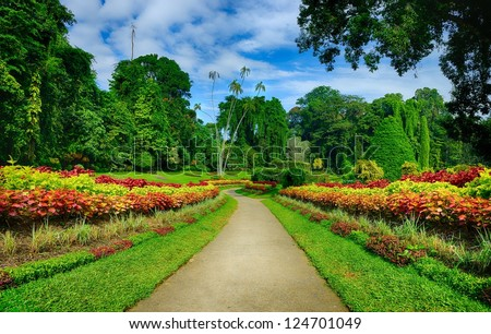 A beautiful alley in the Park with exotic plants. The national Park of Sri Lanka