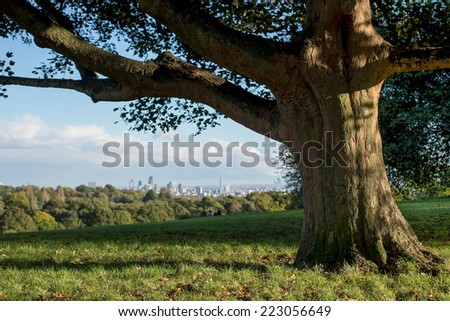 A beautiful ancient tree in Hampstead Heath overlooks the view on the city of London - stock photo