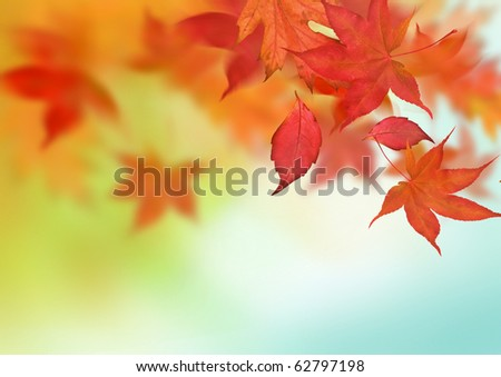 A beautiful autumn background with falling leaves. - stock photo