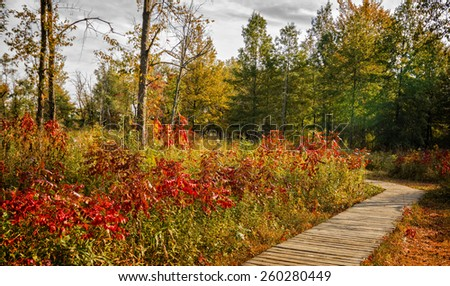 A  beautiful autumn scene along a winding wood boardwalk with colorful leaves of autumn to look at. Find this boardwalk at Irwin Prairie State Nature Preserve in Northwest Ohio. - stock photo