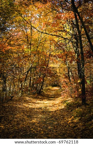 A beautiful autumn scene of a trail surrounded by colorful trees. - stock photo