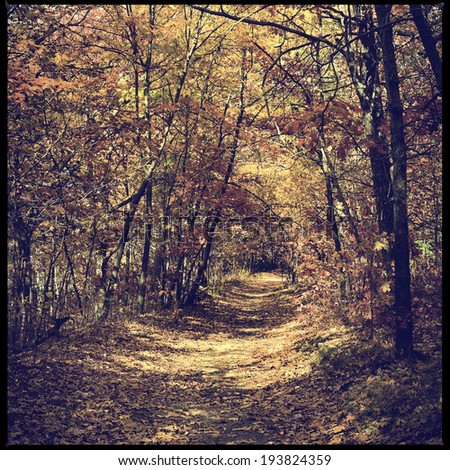 A beautiful autumn scene of a trail surrounded by colorful trees, instagram filter style - stock photo