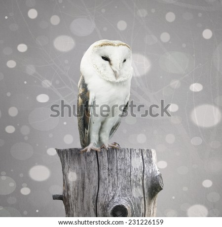 A beautiful barn owl above a trunk with a abstract of snow and branches with textured effect - stock photo
