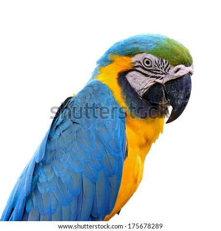 A beautiful bird Blue and Gold Macaw.