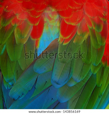 A beautiful bird Greenwinged Macaw feathers - stock photo