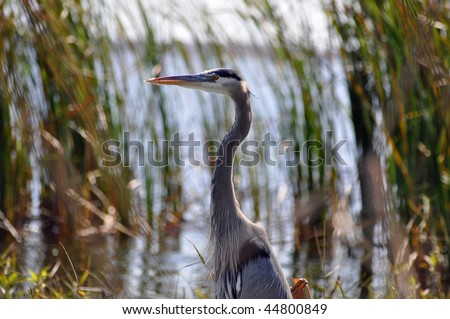 a beautiful bird stands in the water in southern florida - stock photo