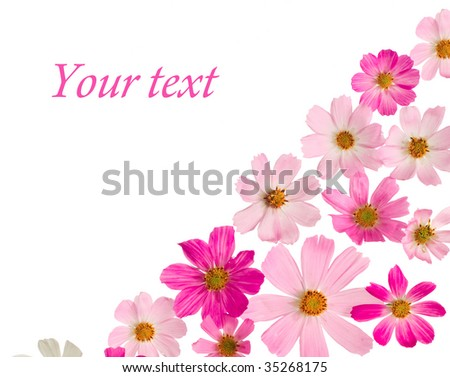 A beautiful border from pink  flowers on a white background - stock photo