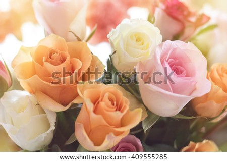 A beautiful bouquet of colorful roses kissed with warm sunlight.
