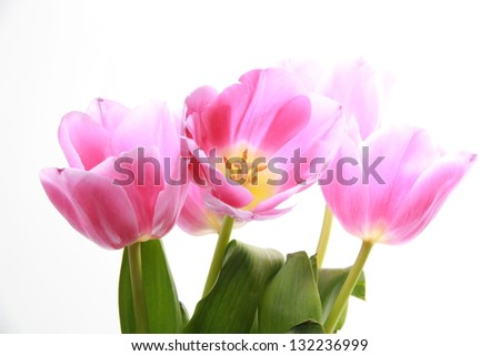 A beautiful bouquet of spring tulips