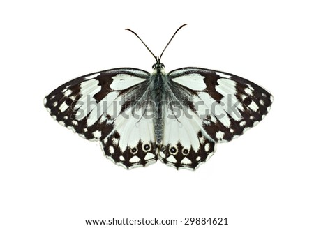 a beautiful butterfly on the white background