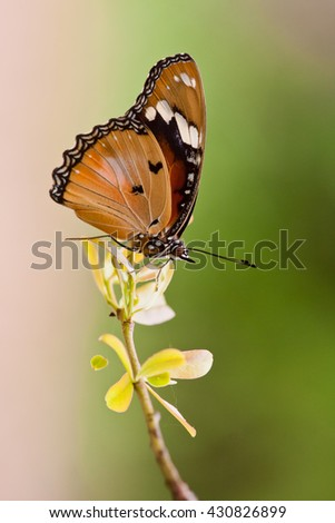 a beautiful butterfly perched on a flower - stock photo