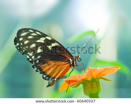 A beautiful butterfly rests on a flower - stock photo
