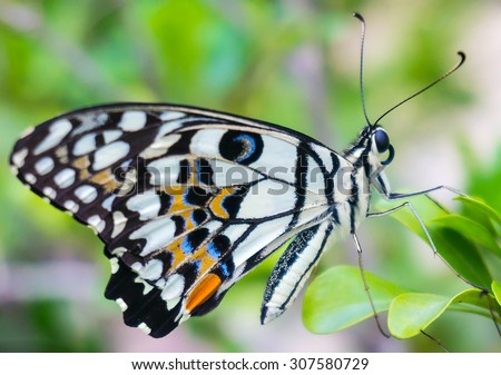 A beautiful butterfly sitting in the tree, close up - stock photo