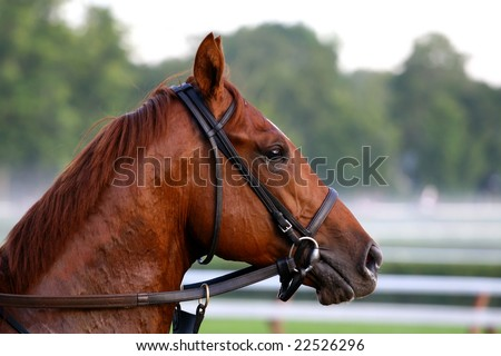 A beautiful chestnut brown thoroughbred race horse on Saratoga Race Tracks backstretch in the early morning light and fog - stock photo