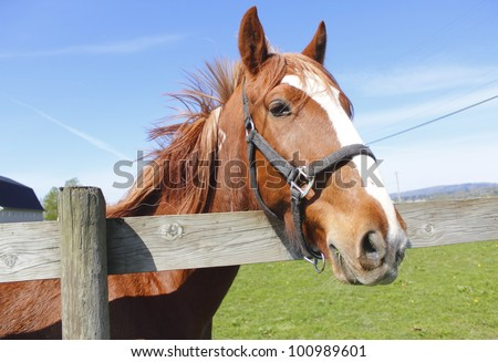 A beautiful chestnut colored Mare stands by the fence/Chestnut Colored Mare/A beautiful chestnut colored Mare - stock photo