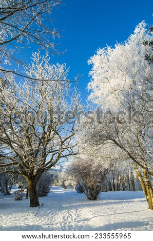 A beautiful city park with trees covered with hoarfrost