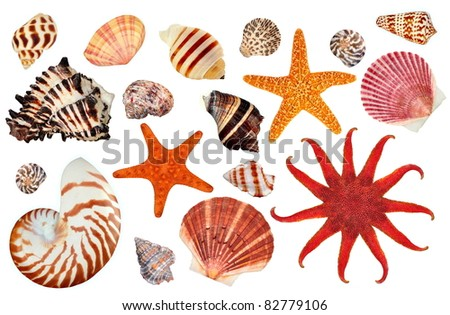 A beautiful collection of starfish and seashells on a white background. - stock photo