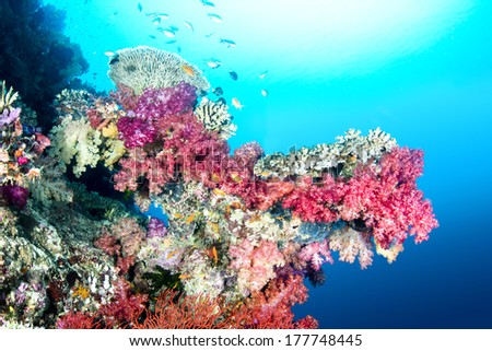 A beautiful color encrusted ledge on a tropical reef in Fiji hosts a multitude of colorful soft and hard corals in clear water with a big sun ball at the surface. - stock photo