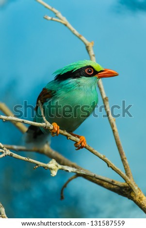 A beautiful, colorful bird perched on a branch - stock photo