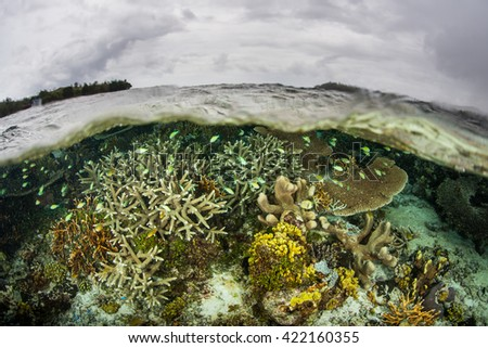 A beautiful coral reef thrives in the Solomon Islands. This remote Melanesian region, in the easternmost part of the Coral Triangle, contains extraordinary marine biodiversity. - stock photo