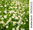 A beautiful daisies field in spring light - stock photo