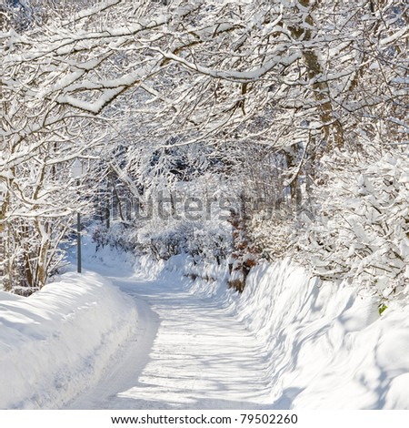 A beautiful day in winter wonderland. Snowcapped trees over snowy country road.