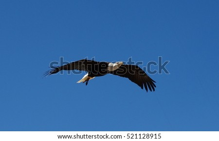 A beautiful eagle flying high in a blue sky