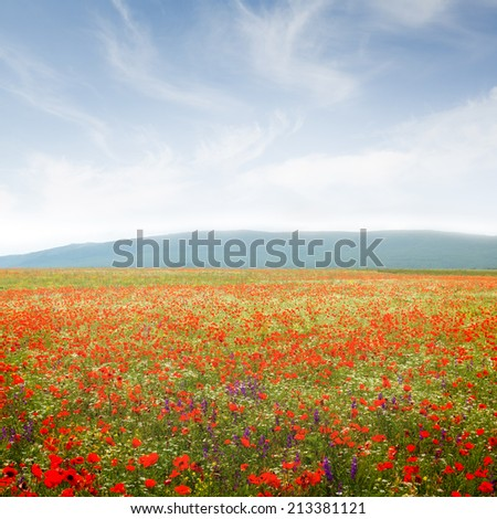 A beautiful field of flowers on a background of mountains and clouds