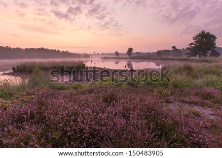 A beautiful foggy morning with blooming heather in late summer