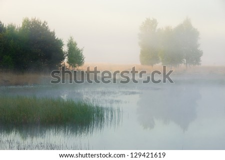 A beautiful foggy spring morning at a fen in the Netherlands.