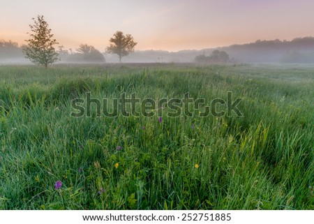 A beautiful foggy sunrise in spring in a field with orchids - stock photo