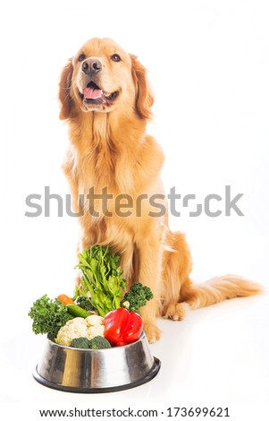 A beautiful golden retriever dog with a smile on his face sitting next to a bowl of fresh vegetables. - stock photo