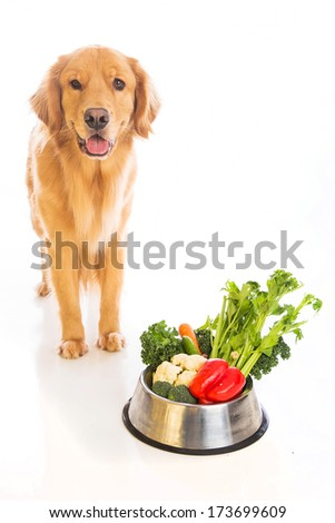 A beautiful golden retriever dog with a smile on his face standing next to a bowl of fresh vegetables. - stock photo